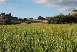La Plana rural. Excursió de Ruralturistic